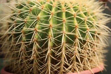 cactus-3378647_1920
