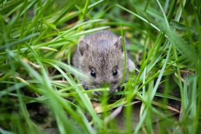 mouse-1335602_1920